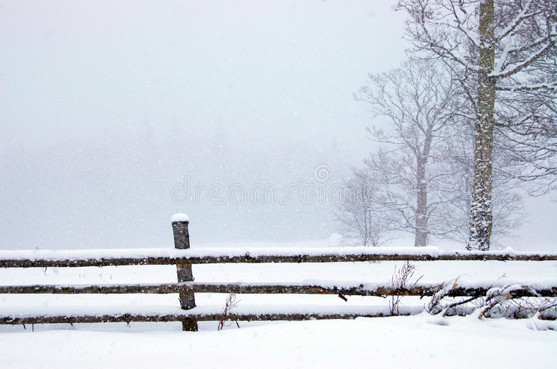 Inverno no parque fotografia de stock royalty free