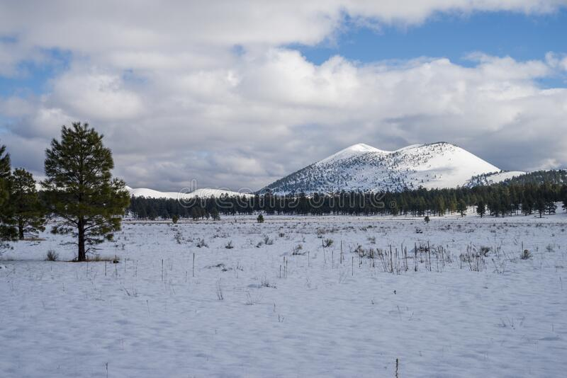 inverno no parque do bonito fotografia de stock royalty free