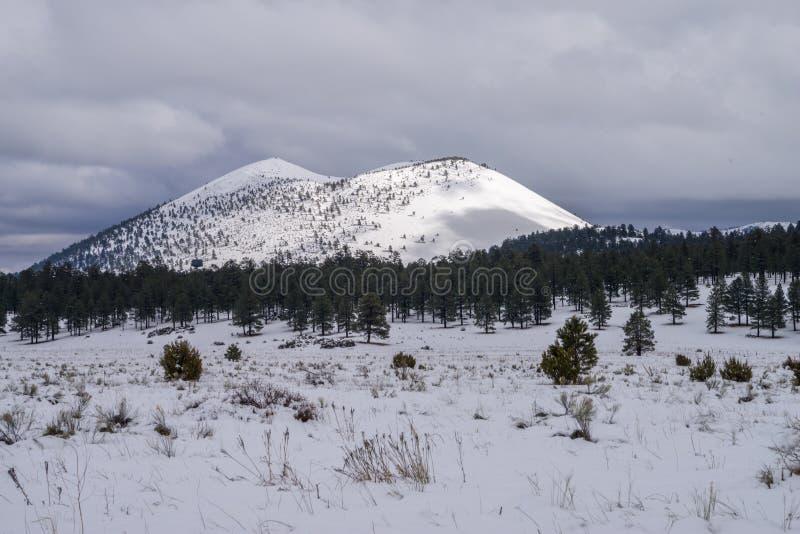 inverno no parque do bonito fotografia de stock