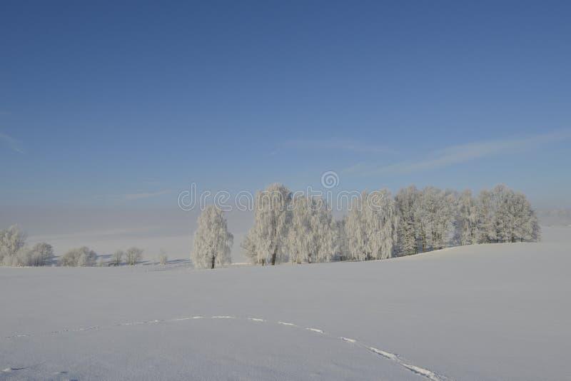 inverno no saxão foto de stock