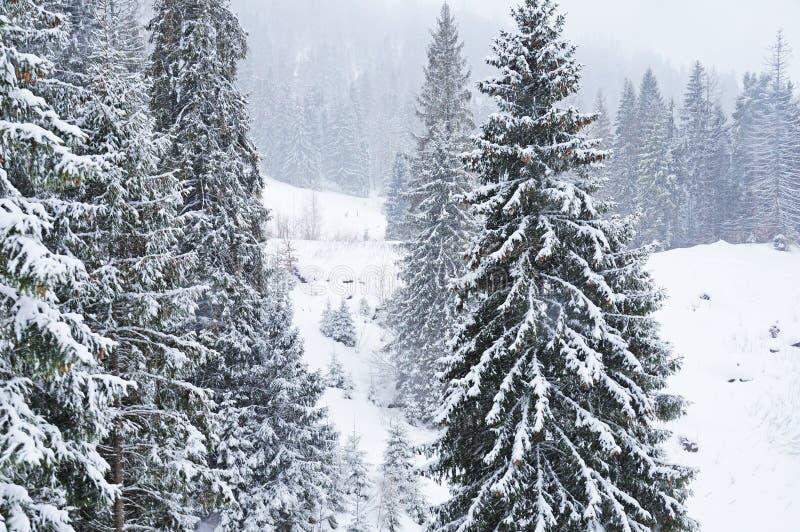 inverno nos Carpathians ucranianos imagem de stock royalty free