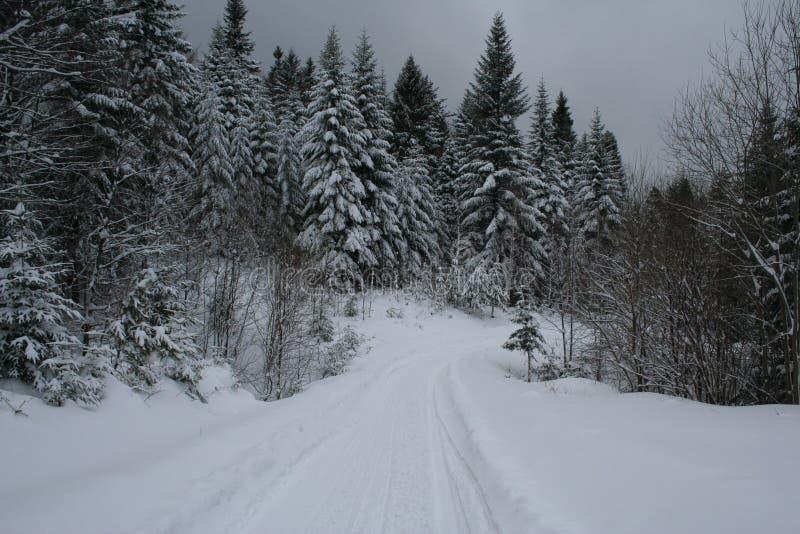 Inverno in Polonia immagine stock libera da diritti