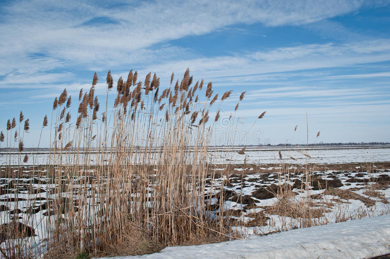 Inverno - primavera immagine stock
