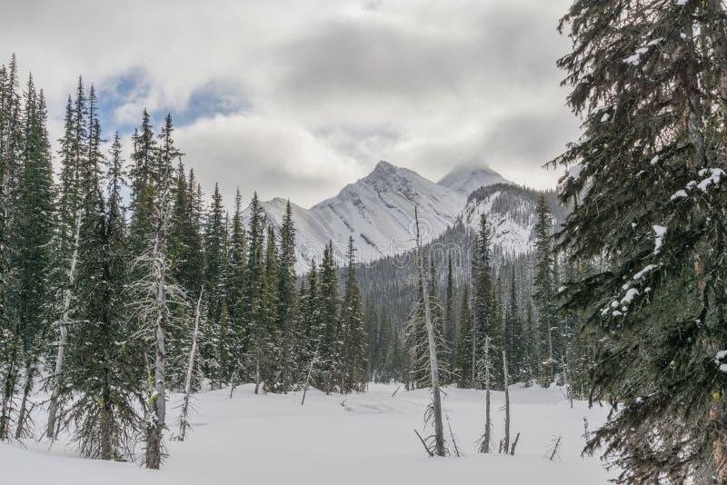 inverno Rocky Mountains Landscape imagens de stock royalty free