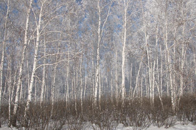 Inverno russo immagine stock libera da diritti