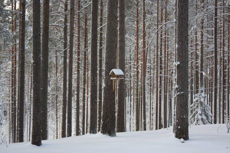 Inverno russo fotografie stock libere da diritti