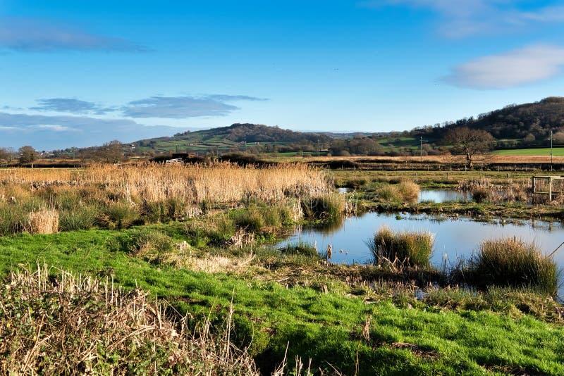 Inverno a Seaton Wetlands in Devon immagine stock libera da diritti