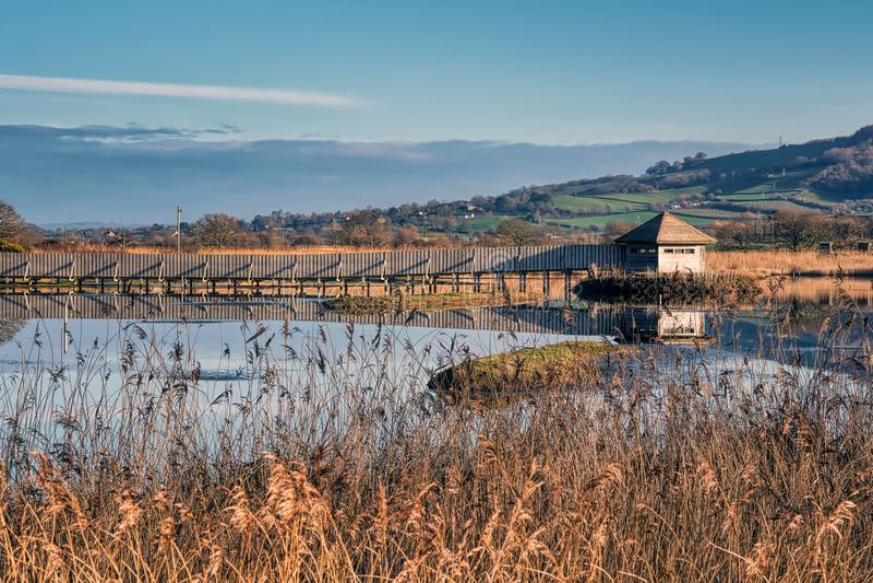 Inverno a Seaton Wetlands in Devon fotografia stock libera da diritti
