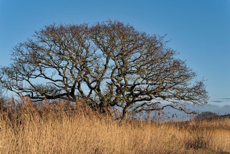 Inverno a Seaton Wetlands in Devon immagini stock libere da diritti
