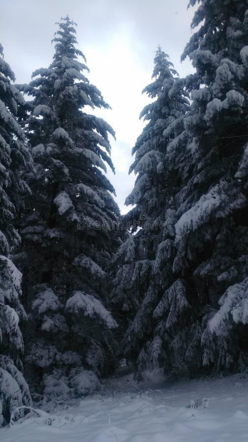 Inverno in Serbia immagine stock libera da diritti