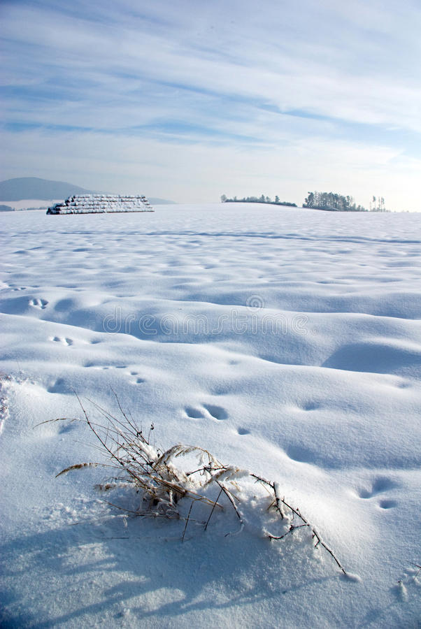 Inverno severo imagens de stock royalty free