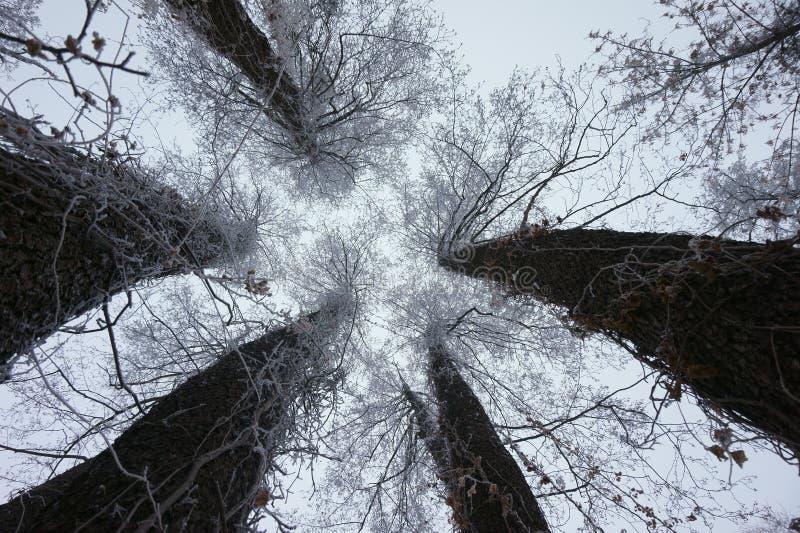 Inverno stupefacente fotografie stock