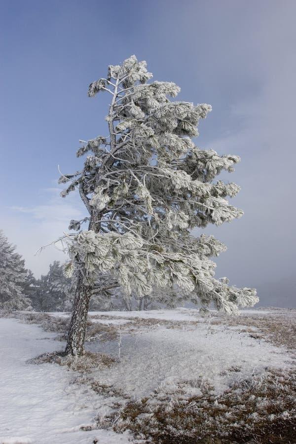 Download Inverno su Demergi immagine stock. Immagine di mare, cielo - 7324039