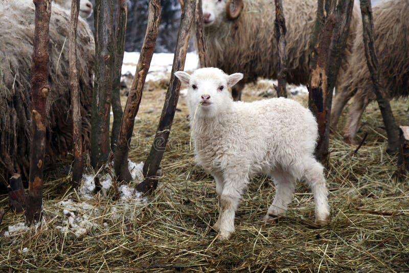 Inverno sull'azienda agricola immagini stock