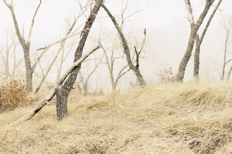 Inverno sulla duna fotografia stock