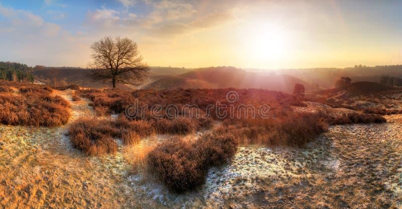 Inverno vibrante di Posbank immagini stock libere da diritti