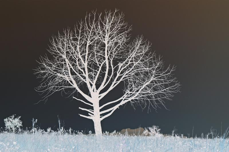 Invert of bare tree on grassland. View of white invert tree and branches against a diffused brown and dark grey sky royalty free stock photos