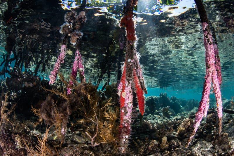 Invertebrado coloridos em raizes dos manguezais fotos de stock