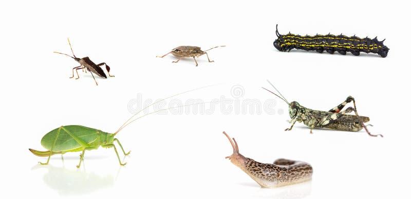 Invertebrado sortidos de North Carolina fotos de stock