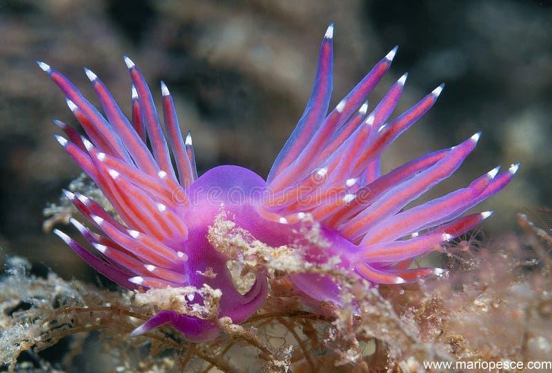 invertebrate arkivfoto