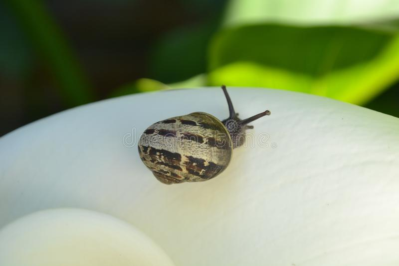 Invertebrate, Fauna, Snail, Insect royalty free stock photo