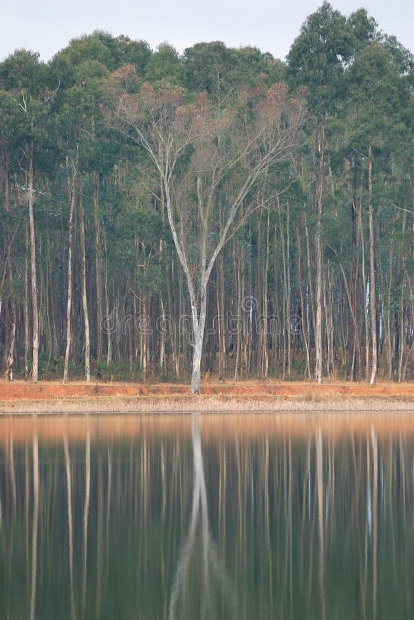 Download Inverted image stock image. Image of rivers, water, image - 8163413