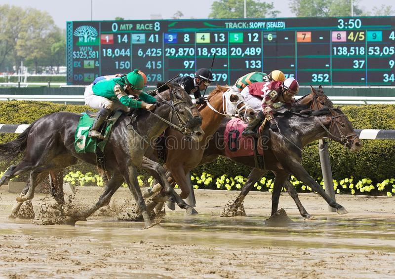 Great Horse Racing Photos from Belmont Park. The Dead Heat, between Invest and Hot Diggitty, number 5, shown here racing in tight quarters on the slop. Photo was royalty free stock photo