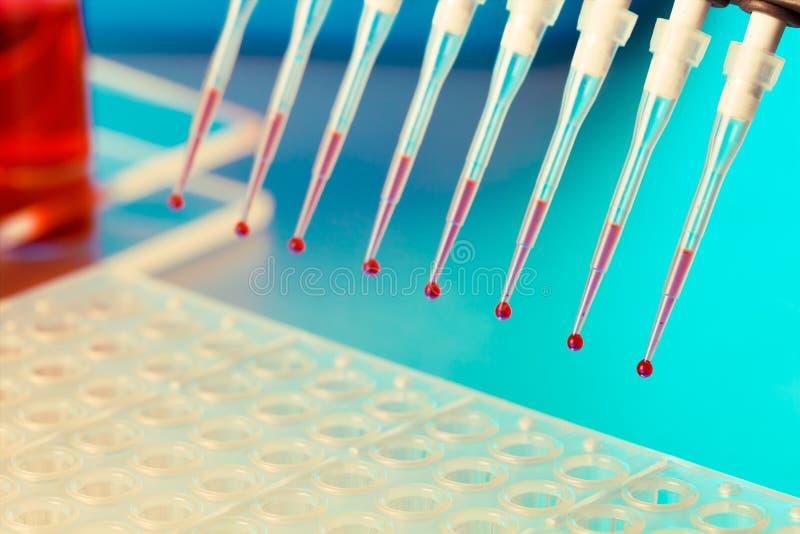 Investigación de la DNA fotos de archivo libres de regalías