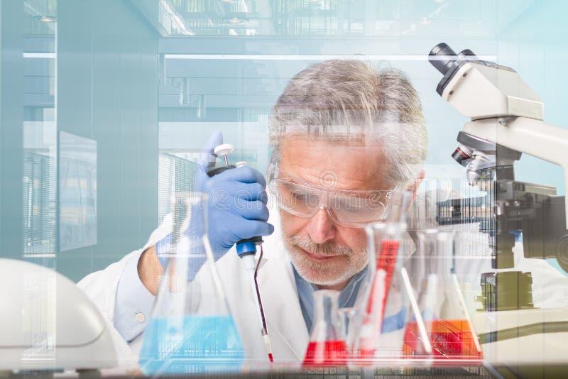 Investigación mayor de las ciencias de la vida que investiga en laboratorio científico moderno fotos de archivo