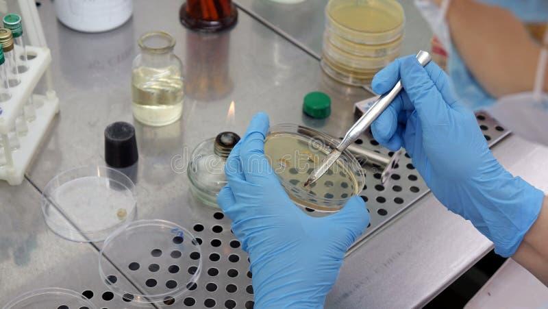 Investigación que conduce del científico de la mujer en el laboratorio Biotecnologías fotografía de archivo libre de regalías