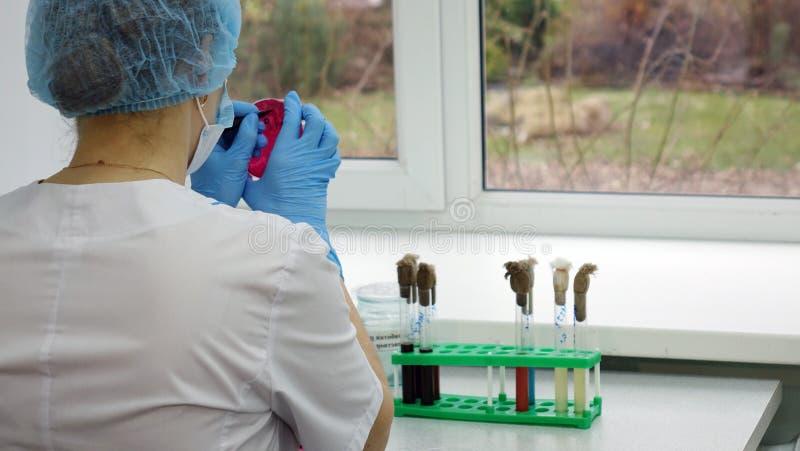 Investigación que conduce del científico de la mujer en el laboratorio Biotecnologías imagen de archivo