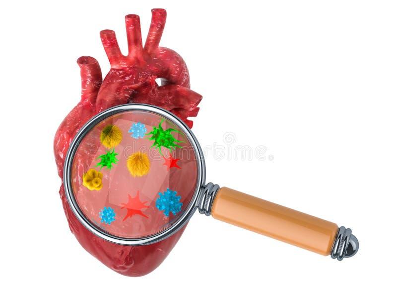 Investigación y diagnosis del concepto de las enfermedades cardíacas Corazón humano con los virus y los bacterias debajo de la lu stock de ilustración