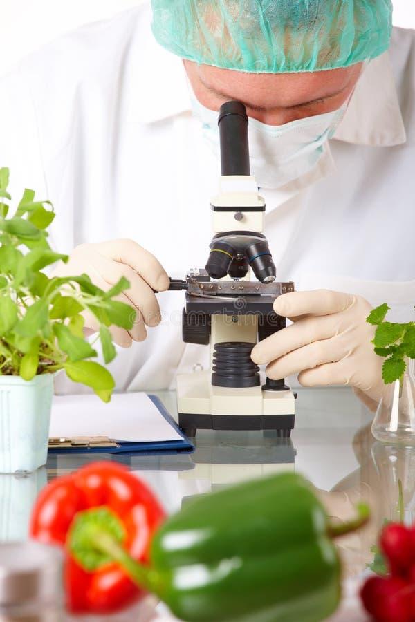 Investigador com vegetal do GMO fotos de stock