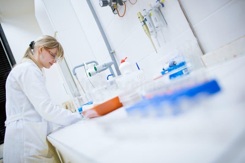Investigador de sexo femenino en un laboratorio de química imagenes de archivo