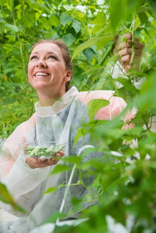 Investigador de sexo femenino sonriente que mira para arriba mientras que escoge habas verdes i foto de archivo libre de regalías