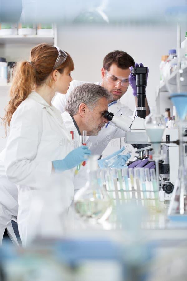 Investigadores de la atención sanitaria que trabajan en laboratorio científico fotos de archivo libres de regalías