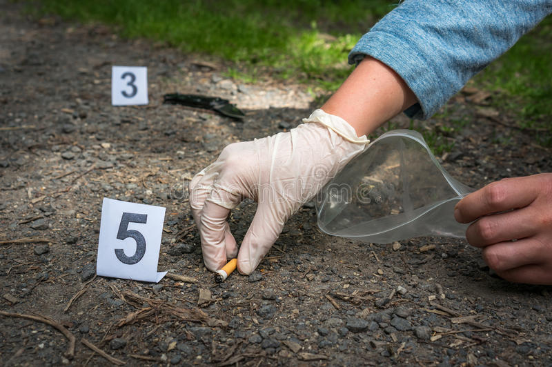 Investigator collects evidence - crime scene investigation. Investigator collects evidence cigarette - crime scene investigation royalty free stock images