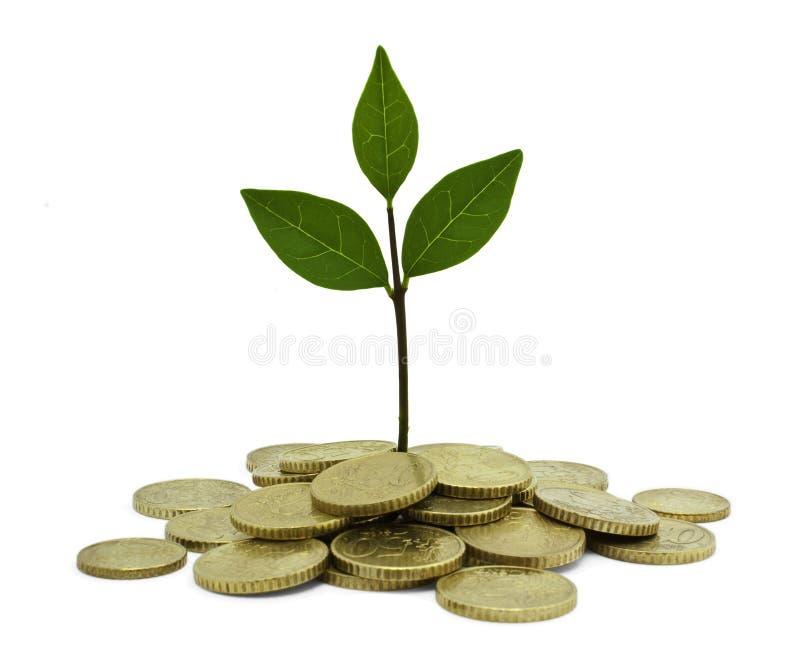 Investimento verde immagini stock libere da diritti