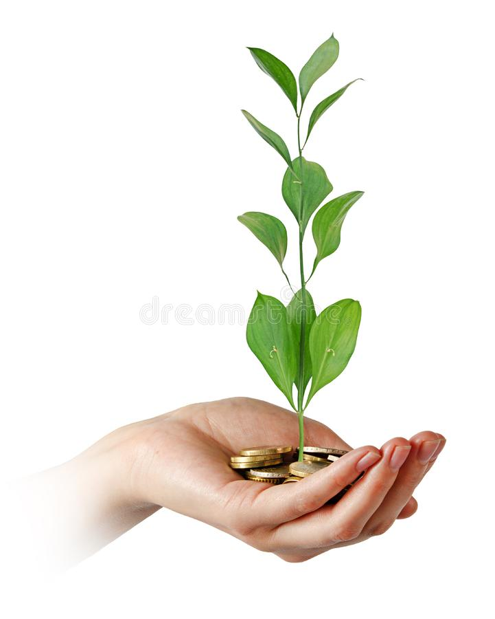 Investing in green stock photo
