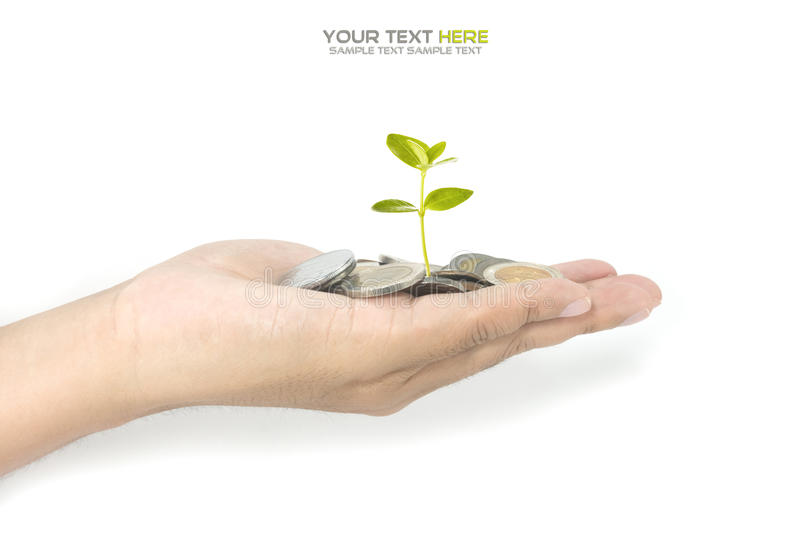 Investment concept. With growth of money royalty free stock images