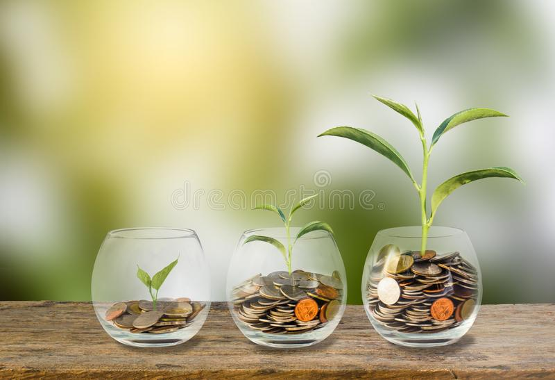 Investment concept. Growth plant on coins three step in glass. Investment concept. Growth plant on coins three step in clear glass bottle on wooden table with stock photos