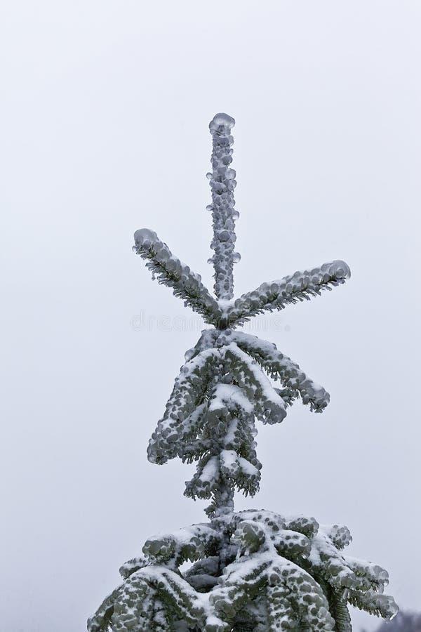 Invierno 7 imagenes de archivo