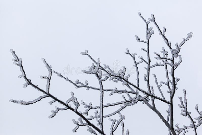 Invierno 6 fotografía de archivo