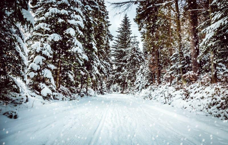 Invierno Backroad fotografía de archivo