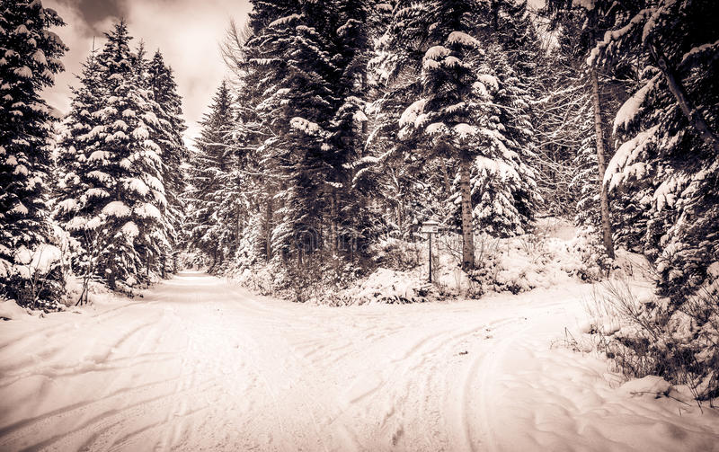 Invierno Backroad foto de archivo libre de regalías