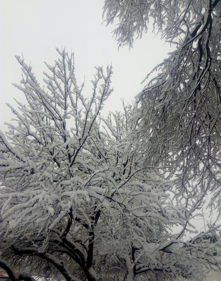 Invierno de la nieve imágenes de archivo libres de regalías