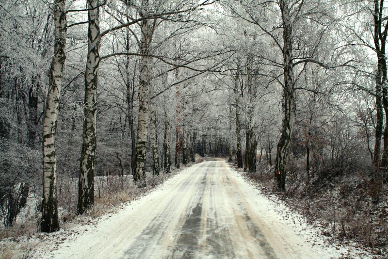 Invierno de madera del camino fotografía de archivo libre de regalías