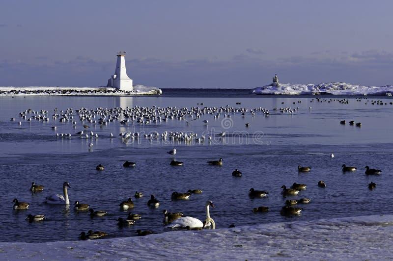 Invierno - el lago Ontario imágenes de archivo libres de regalías