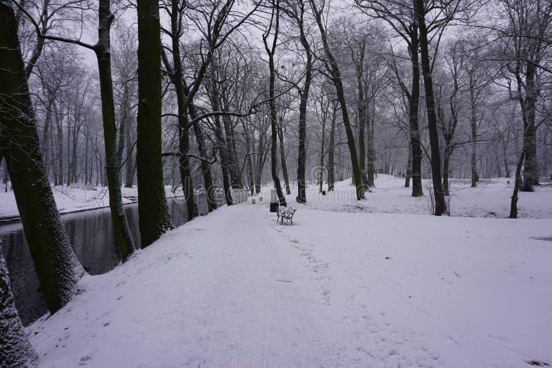 Invierno en el parque 4 imagen de archivo