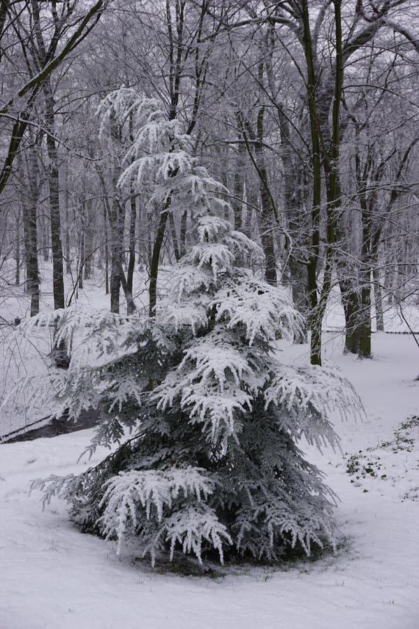 Invierno en el parque 5 imágenes de archivo libres de regalías